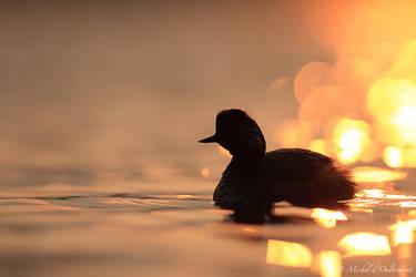 ombre sur l'eau by Micheldoultremont