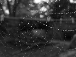 spiderwebs by grace-emily