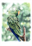 Parrot by ElenaR
