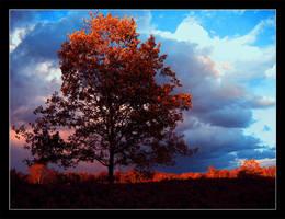 heathland by Zibro