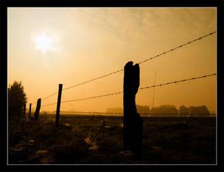 Golden morning by Zibro