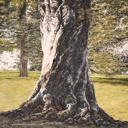 Blenheim Tree by andreasmichel