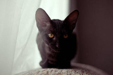 Little one by dblg