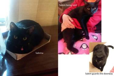 Kitties Sabrina and Salem grown up by AlisiaLanet