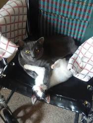 Kitties Shevia and Lucky by AlisiaLanet