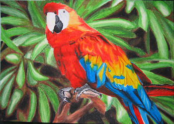 Oil Pastels Parrot by blossomcrown