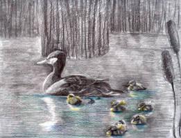 Ducklings by RebexTrip