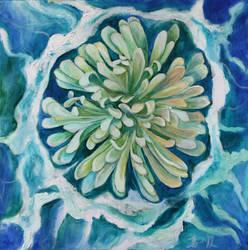Chrysanthemum Variation by RebexTrip