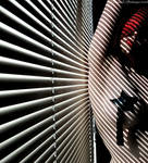 . zebra crossing . by Countess-Grotesque