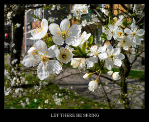 Let there be spring by gshegosh
