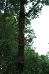 Trees II by hippiexlove