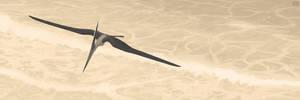 Pteranodon longiceps by jconway