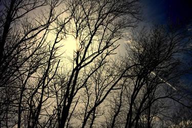 Twilight by Photographiq