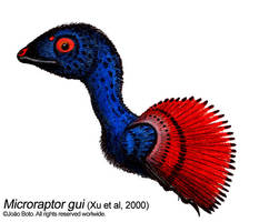 Microraptor gui by Sputatrix