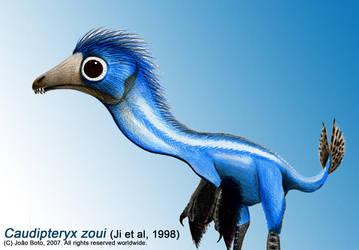 Caudipteryx zoui by Sputatrix