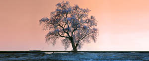 Single Tree - MasAlla by rasecphotograpy