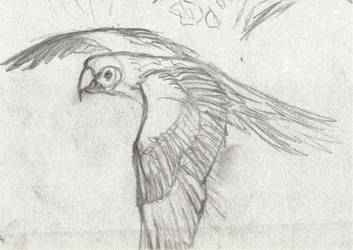 Parrot by Ignis-Corvus