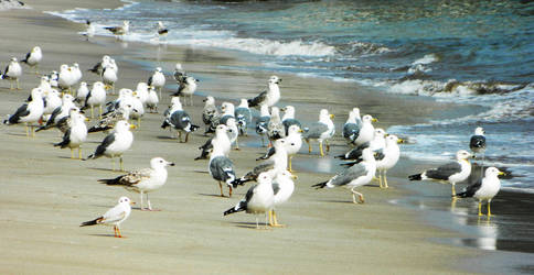 Flock of Seagulls by IG-P
