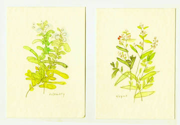 Rosemary and Thyme by hooraylorraine