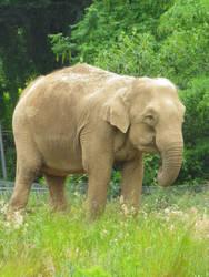 elephan by boodlemoo