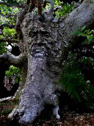 esprit de la nature (PNG) by boodlemoo