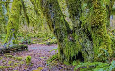 Forest de Hoh Rain by boodlemoo