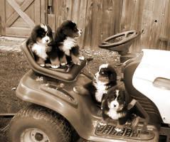 tractor puppies by xchocolatexbinkx