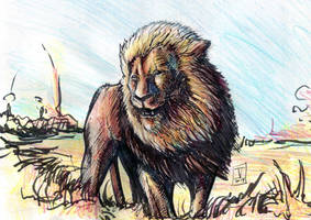 Lion sketch by StereoiD