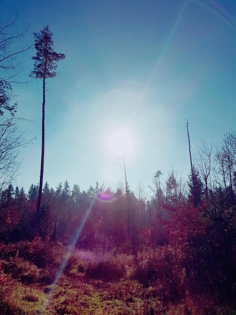 Sun in the woods by badi89
