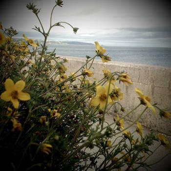 Beside the sea by devincisharky