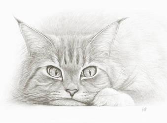 Disgruntled cat by Bastet-mrr
