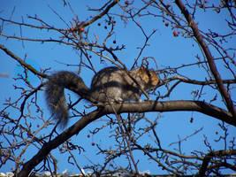 ninja squirrel by millie369