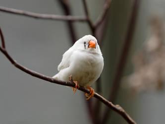 Bird Stock - Finch by NickiStock