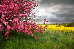 Floral Background Stock by NickiStock