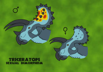 Triceratops Sexual Dimorphism by TyrannoNinja