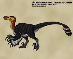 Acheroraptor by TyrannoNinja