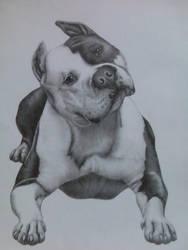 Pitbull dog by D1NAR