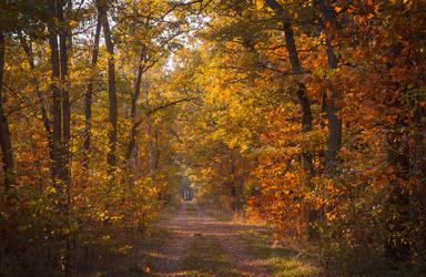 Autumn walk by Luisa-Puschelova-7