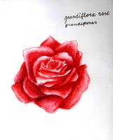 #223 Grandiflora rose (grandifloras) by LateAMdoodles