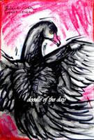 #231 Black swan by LateAMdoodles