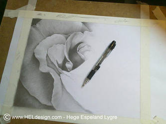 WIP - Pencil Drawing - 'Rose' by Tingeling13