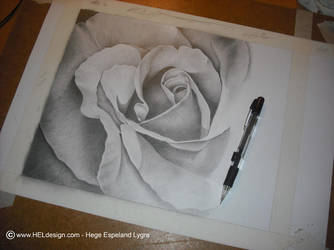 WIP2 - Pencil Drawing - 'Rose' by Tingeling13