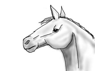 Gray Horse Portrait by jennego