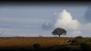 Lone tree by SergioGonzalez