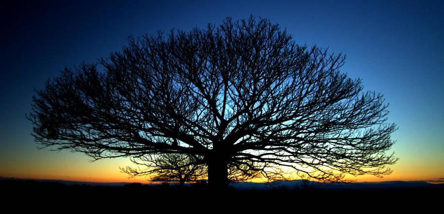 One tree by SergioGonzalez