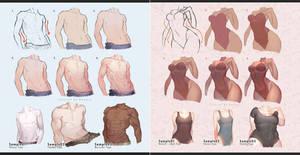 Male vs Female Body by kawacy