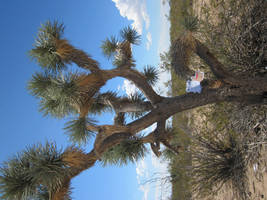 Help us outa this Joshua Tree by JasonYoungdale