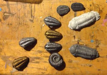 Trilobite Pins by Insidebook