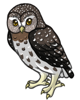 To the Sky- Pygmy Owl by Reiterei