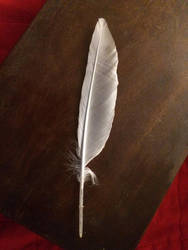 Single Feather by KarenAld